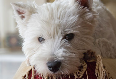 Dog friendly inns in the Lake District