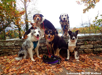 Lakeland Dog Walker